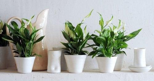 Уборка растений