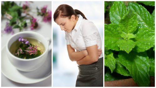 Лечим синдром раздраженного кишечника: 5 целебных трав