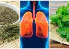 Здоровые лёгкие 8 полезных трав