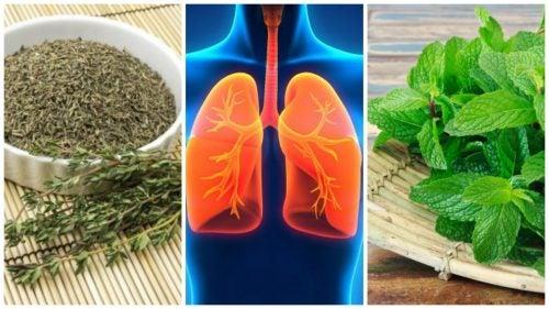 8 полезных трав, которые помогут улучшить здоровье легких