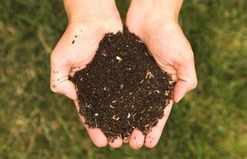 Экологичные удобрения и пищевая пирамида