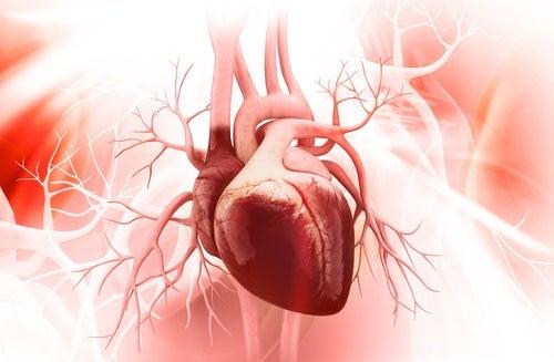 Яблоки защищают здоровье сердца и сосудов