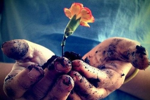 Цветок и рак