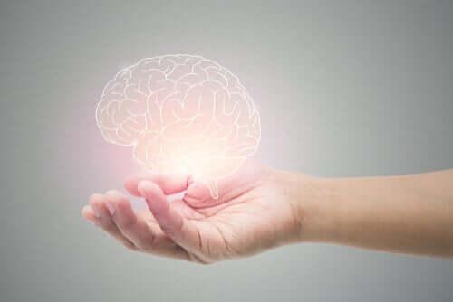 5 простых привычек для восстановления клеток мозга (нейрогенез)