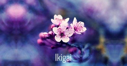 7 японских слов, способствующих личностному росту. Это потрясающе!