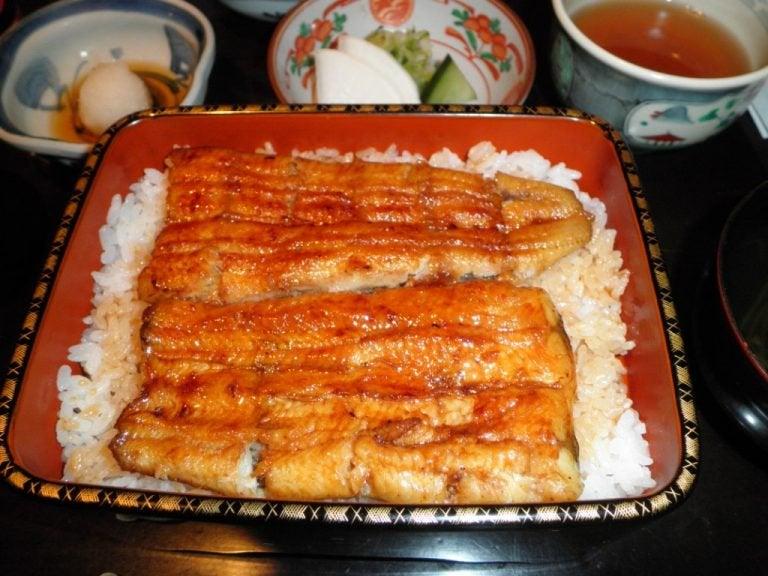 Рыба угорь
