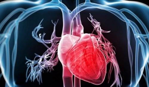 Брокколи укрепляет сердце