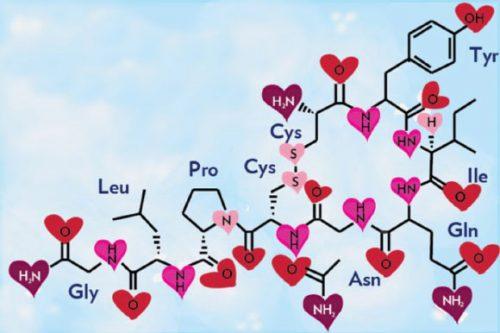 Окситоцин и гормон любви