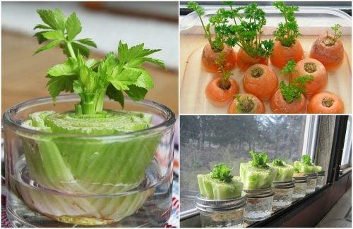 Овощи, которые можно регенерировать: 5 полезных лайфхаков!