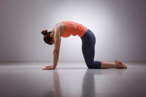 Растяжка спины снимет боль в мышцах