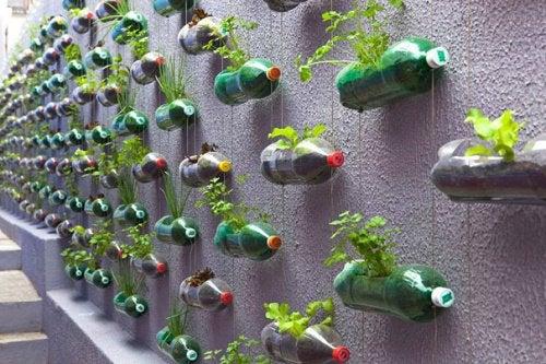 Вертикальный сад и пластиковые бутылки