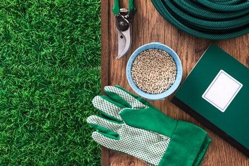Определитесь с местом для выращивания черники и клюквы