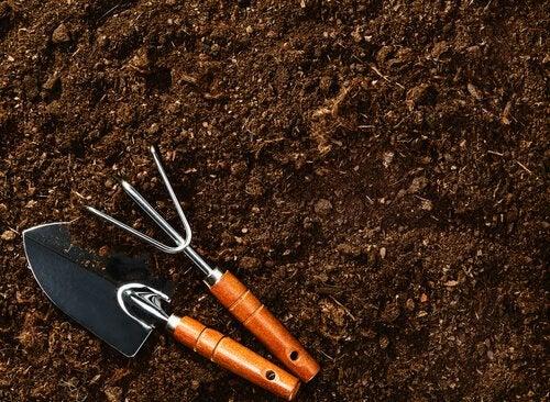 Подготовьте почву, где будет выращиваться черника и клюква