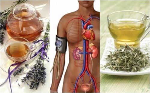 5 лекарственных трав, которые помогут снизить кровяное давление