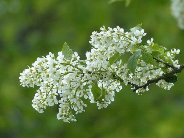 Дягиль и другие растения которые помогают бороться с депрессией