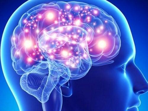 Лучшие лекарственные растения и специи для здоровья мозга
