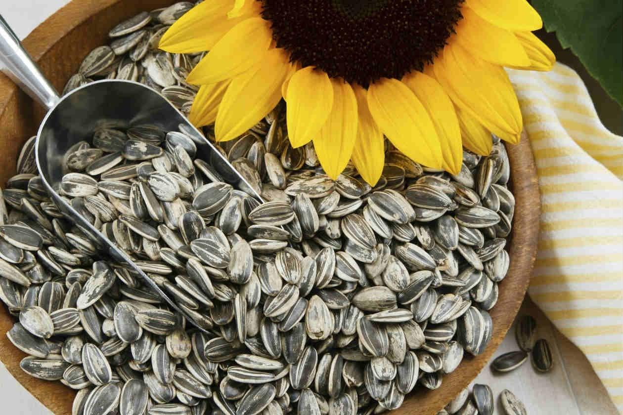 Семена подсолнуха помогут победить целлюлит