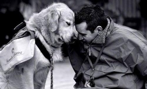 Если вы страдаете от ностальгии, заведите собаку