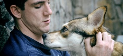 Собака и ностальгия