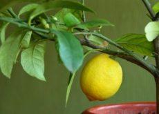 Как вырастить дома дерево