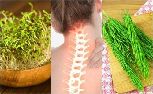 7 лечебных растений, которые помогут укрепить кости
