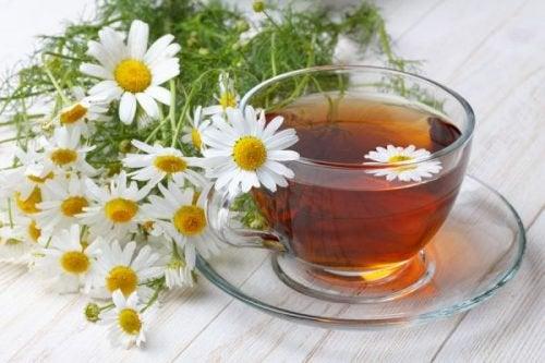 Ромашка и её 6 целебных свойств для нашего здоровья