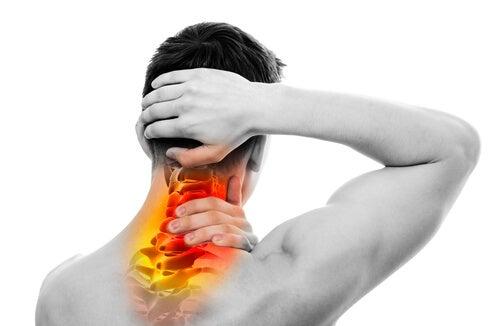 Мышцы шеи и позвоночник