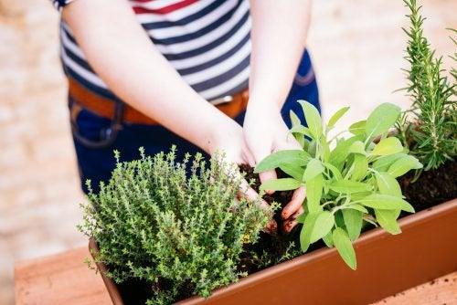 Съедобные растения и мини-сад