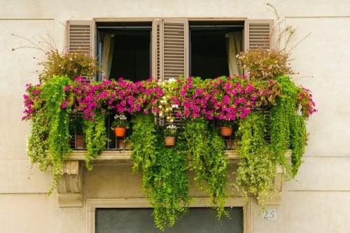 Растения и мини-сад на балконе