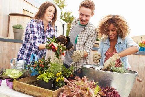 Друзья сажают растения в мини-сад