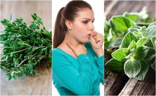 Как облегчить кашель с мокротой при помощи 5 лекарственных растений?