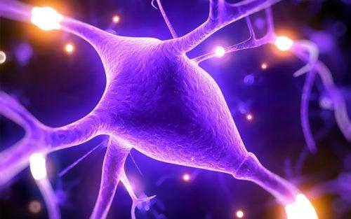 5 причин, почему магний улучшает работу нашего мозга