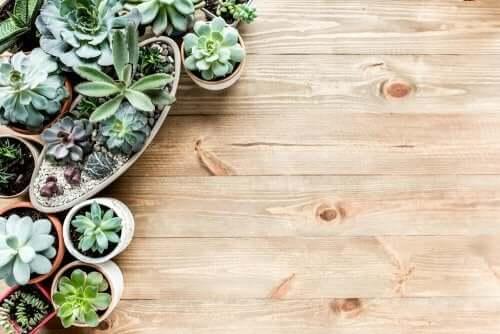5 идей, как вырастить мини-сад у себя дома