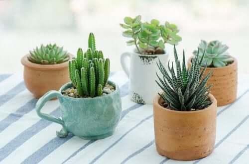 Мини-сад и виды растений