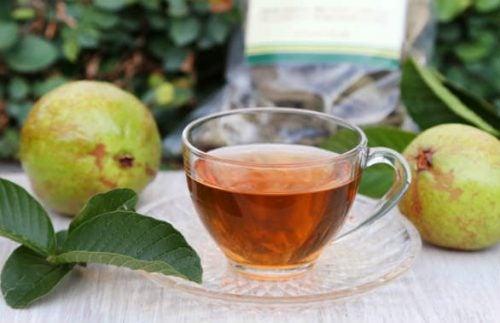 Чай из листьев гуавы помогает контролировать уровень сахара в крови