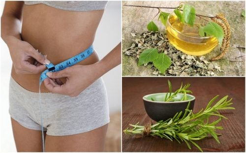 8 целебных трав, которые помогут тебе похудеть