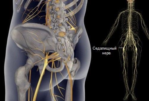 Простые упражнения при боли в седалищном нерве, спине и бедрах