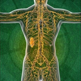 Лимфатическая система: 4 важных аспекта, о которых нужно знать