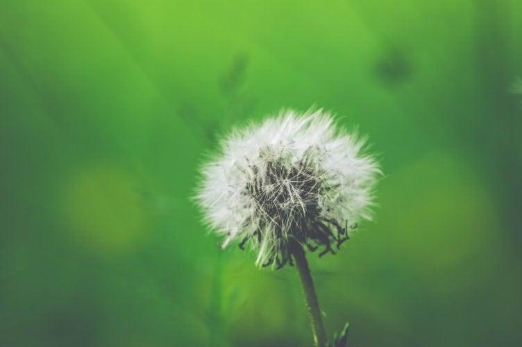 Аллергический ринит и аллергены