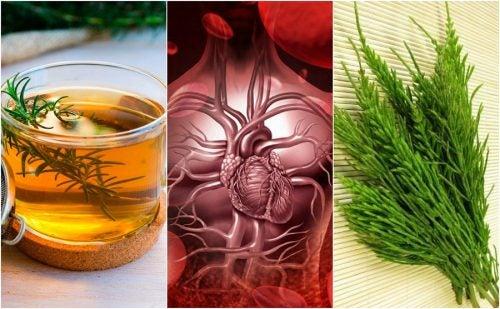 5 лекарственных трав, чтобы улучшить кровообращение