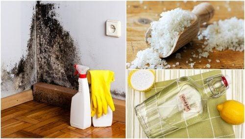 Как избавиться от повышенной влажности в доме: 5 эффективных средств