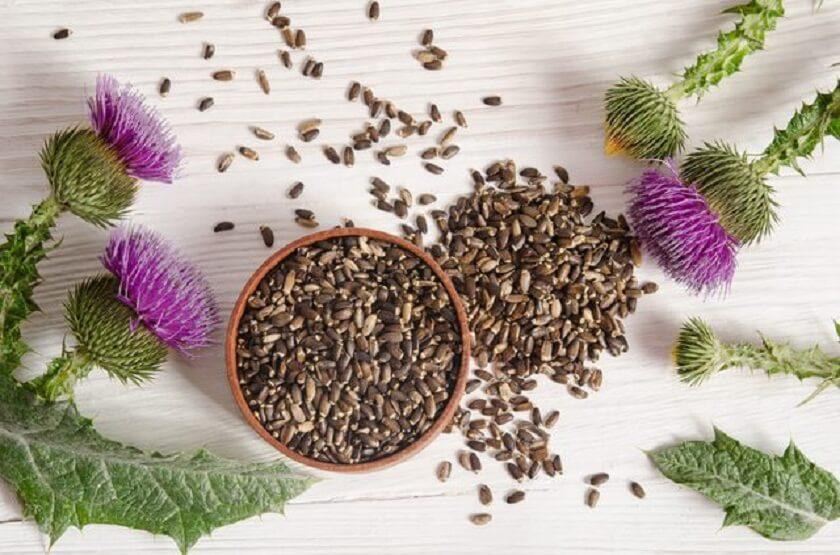 Обильные менструации и семена расторопши