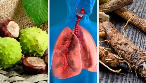 Укрепить легкие и улучшить дыхание помогут 4 домашних средства