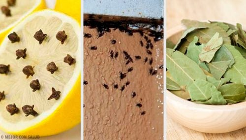 Как бороться с насекомыми натуральными средствами