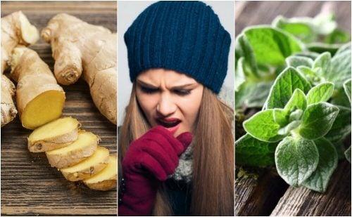 Мокрота: 5 растительных средств, очищающих дыхательные пути