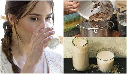 Как приготовить молоко из семян канареечника и чем оно полезно?