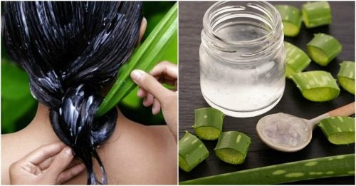 Оздоровить волосы с помощью алоэ вера: 4 рецепта для вас