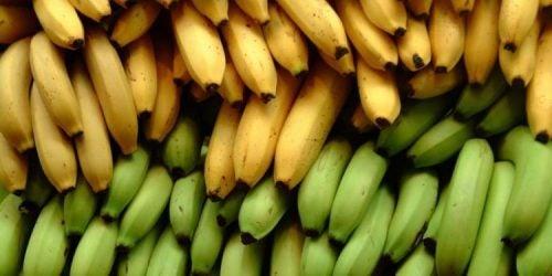 Платан и банан: в чем разница?