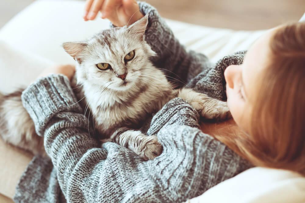 Домашние животные полезны для здоровья