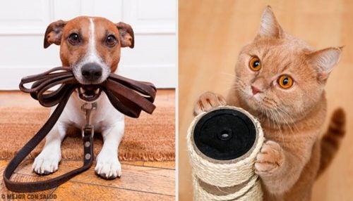 Какие домашние животные больше всего полезны для здоровья?